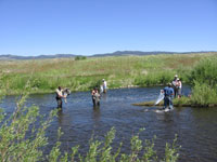 Teachers conduct insect sampling in Silver Bow Creek near the Warm Springs Ponds as part of the Montana Science Partnership.
